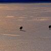 凍る湖面を歩く