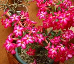 沖縄の花 その15