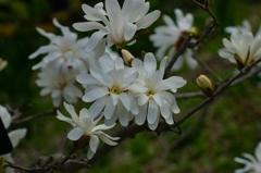 追憶の春 その22