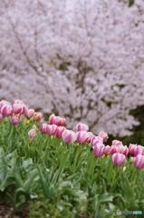 春のコンビ