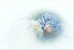夏の絵手紙 flowerとsnail