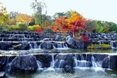水景棚の紅葉