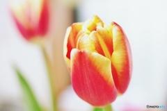 春うらら、元気出してね^^