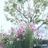 ロマンチックな花壇