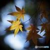 密やかな秋