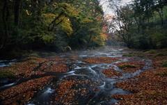 秋深まる渓流の色
