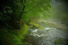 神々が宿る森の清流(番外編)②