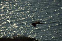 潮のきらめき、空の生き物、安レンズ