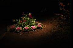 夜のオアシス