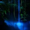 夜のジャングルツアー