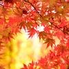 秋のほんの一例