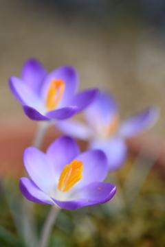 小さい花はマクロで