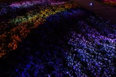 地に咲く虹