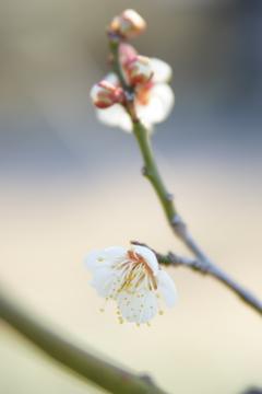 桜も咲きそう