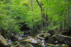 海沢川の新緑