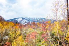 冬と秋の間