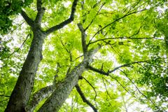 枝いっぱいの緑