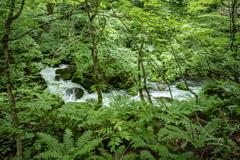 密林の流れ