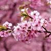 春からの花束
