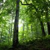 斜面に直立する木々