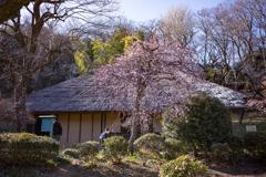 春の古民家