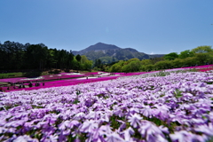 武甲山麓に広がる芝桜