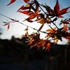 秋が終わる…