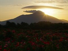 筑波山とポピー