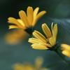 クラネガで撮る花