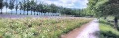 夏花の小路