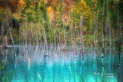 錦秋の青い池