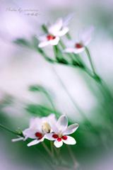 Flower in my garden Ⅺ