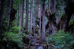 21世紀の森 2019-2