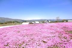 春色の高原 15