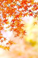 秋の光の中で