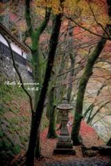 晩秋の横蔵寺 5