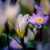 Flower in my garden Ⅳ
