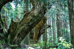 神秘の森 Ⅻ
