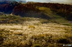 秋色に染まる たしろ高原 1