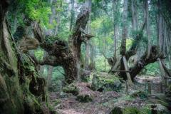 神秘の森 XV