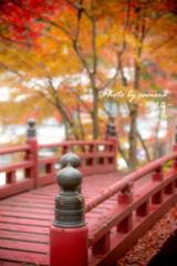 晩秋の横蔵寺 4
