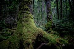 苔の森 3
