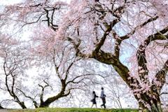 桜色デート