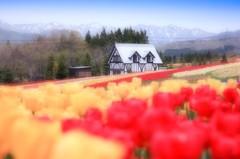 春色の高原 12