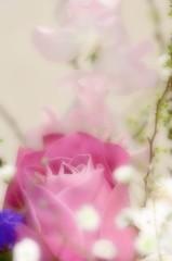 My wife's flower arrangement  ~春の予感~ 2