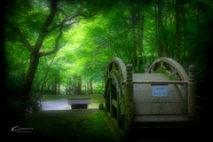 新緑の大矢田神社  Ⅵ