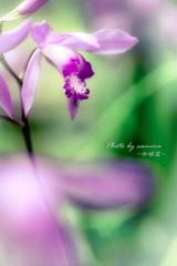 Flower in my garden Ⅵ
