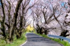 春を駆け抜ける
