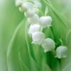 Flower in my garden Ⅱ