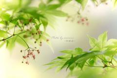 モミジの花 Ⅰ